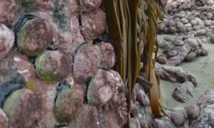 Απίστευτες φωτογραφίες από τη Νέα Ζηλανδία: Ο σεισμός «σήκωσε» τον πυθμένα δύο μέτρα