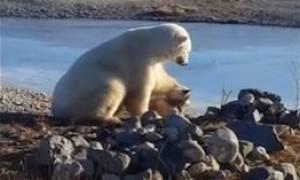 Απίστευτο! Μια πολική αρκούδα πλησιάζει και χαϊδεύει στοργικά έναν σκύλο! (video)
