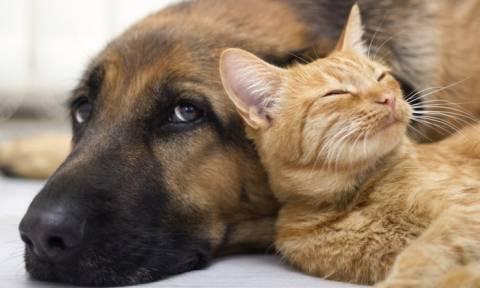 Πρόεδρος φιλοζωικής κατηγορείται ότι εξόντωσε 2.000 ζώα