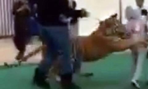 Βίντεο σοκ: Τίγρης επιτίθεται σε κοριτσάκι μέσα σε εμπορικό κέντρο
