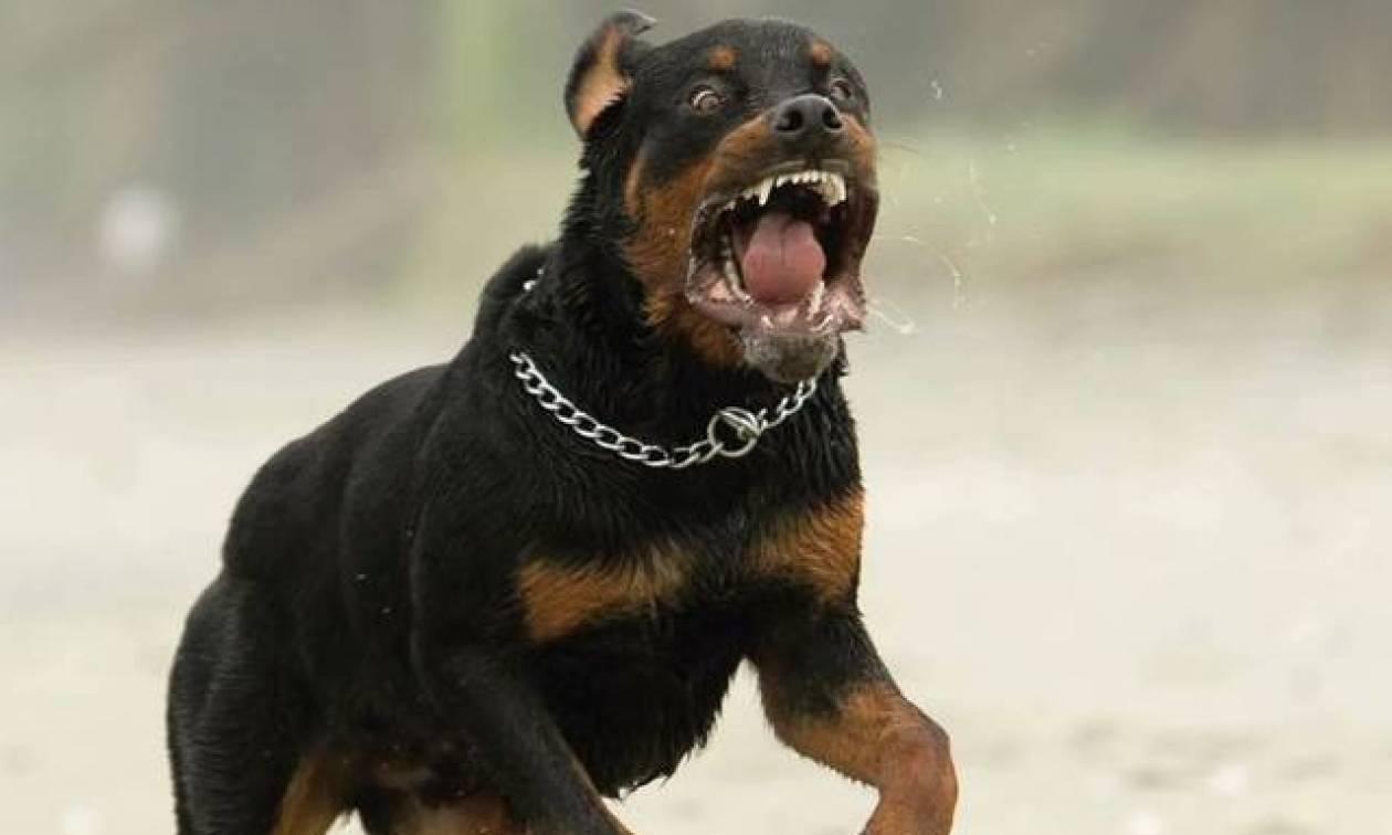 Αποτέλεσμα εικόνας για σκυλι επιθεση