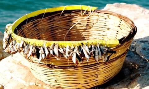Ψαράδες από τη Σκόπελο έριξαν παραγάδι σε βάθος 300 μέτρων. Οταν το ανέβασαν... έπαθαν σοκ! (photo)