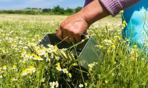Έρχεται φορο-βόμβα για χιλιάδες αγρότες
