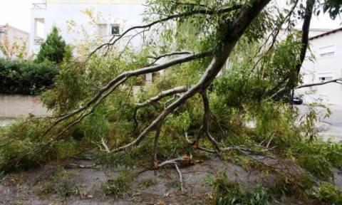 Κακοκαιρία: Έπεσε δέντρο στην Ευελπίδων λόγω των θυελλωδών ανέμων (vid)