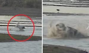 Το βίντεο που σόκαρε τον πλανήτη: Κροκόδειλος κατασπαράζει σκύλο. Αντέχετε να το δείτε;