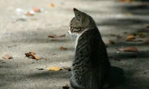 Επιχορόγηση ύψους 600.000 ευρώ σε Δήμους και συνδέσμους Δήμων για τα αδέσποτα ζώα