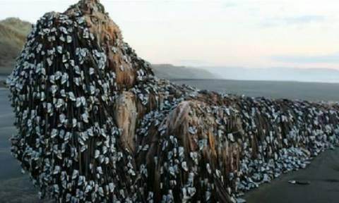 Φάλαινα-τέρας ξεβράστηκε στις ακτές της Νέας Ζηλανδίας (video)