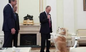 Ο σκύλος του Πούτιν αγρίεψε τρομοκρατώντας Ιάπωνες δημοσιογράφους! (video)