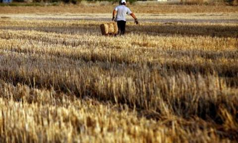 «Ένεση» ρευστότητας 932 εκατ. ευρώ σε 622.000 αγρότες