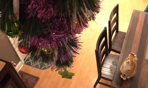 Μεγαλοφυές: 50 ξεκαρδιστικοί τρόποι για να σώσετε το χριστουγεννιάτικο δέντρο σας από τα κατοικίδια