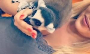 Παρουσιάστρια το... τερμάτισε: Ταΐζει ζωάκι πάνω στο στήθος της (photos)