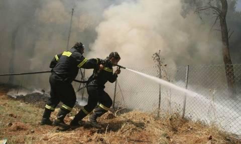 Δύσκολες ώρες για δύο πυροσβέστες– Χτυπήθηκαν από τσιγγάνους