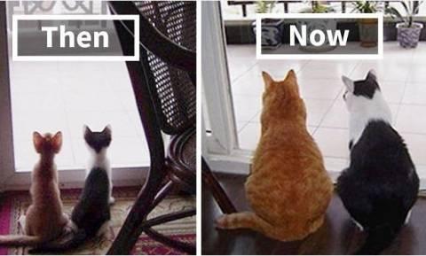 Viral: 45 απίθανες «πριν και μετά» φωτογραφίες κατοικίδιων ζώων που μεγάλωσαν μαζί