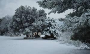 Καιρός - Χιονίζει ΤΩΡΑ στην Αττική - Δείτε LIVE εικόνα