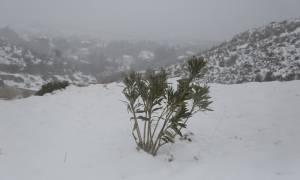 Καιρός - Παραμονή Πρωτοχρονιάς: Η Τροχαία προειδοποιεί - Κλειστοί δρόμοι στην Αθήνα