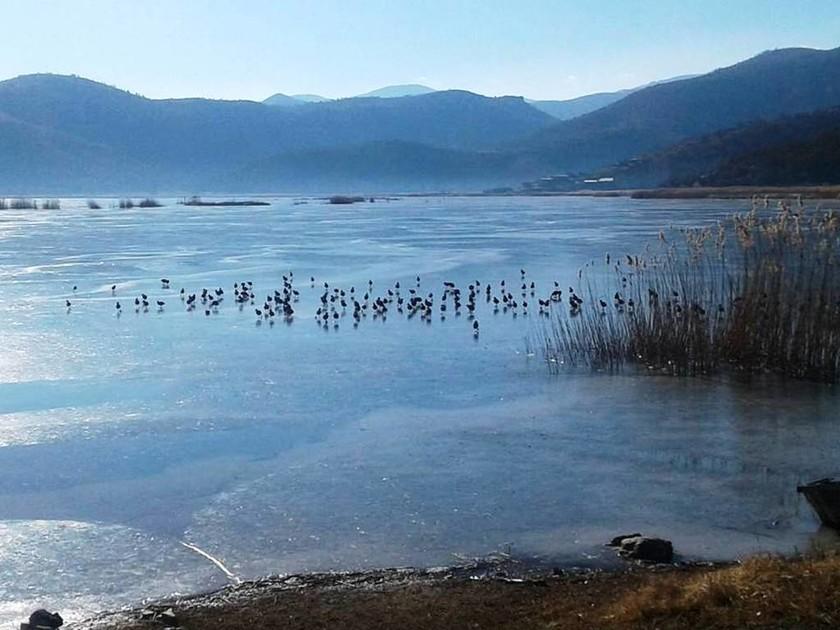 Πάγωσαν από τις χαμηλές θερμοκρασίες οι λίμνες Καστοριάς και Χειμαδίτιδας (pics)
