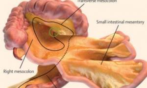 Απίστευτο: Ανακαλύφθηκε νέο όργανο μέσα στο ανθρώπινο σώμα!