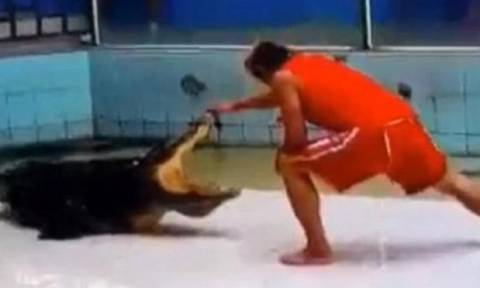ΠΡΟΣΟΧΗ, ΣΚΛΗΡΟ ΒΙΝΤΕΟ: Κροκόδειλος προσπαθεί να ξεριζώσει το χέρι του εκπαιδευτή του