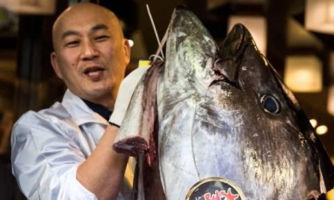 Ιάπωνας εστιάτορας αγόρασε ψάρι έναντι… 600.000 ευρώ (video)