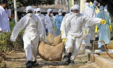 Χιλιάδες πάπιες και πουλέρικα σφαγιάστηκαν σε Γαλλία και Τσεχία