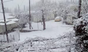 Καιρός - Live: Λευκό τοπίο η Αχαΐα - Χιόνισε μέχρι και στο κέντρο της Πάτρας (photo-video)