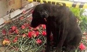 Ο «Χάτσικο» της Σμύρνης: Ραγίζει καρδιές ο σκύλος αστυνομικού που σκοτώθηκε στη βομβιστική επίθεση