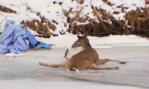 Viral: Αυτό το ελάφι παγιδευμένο στον πάγο είναι όλοι εμείς σήμερα το πρωί (Vid)