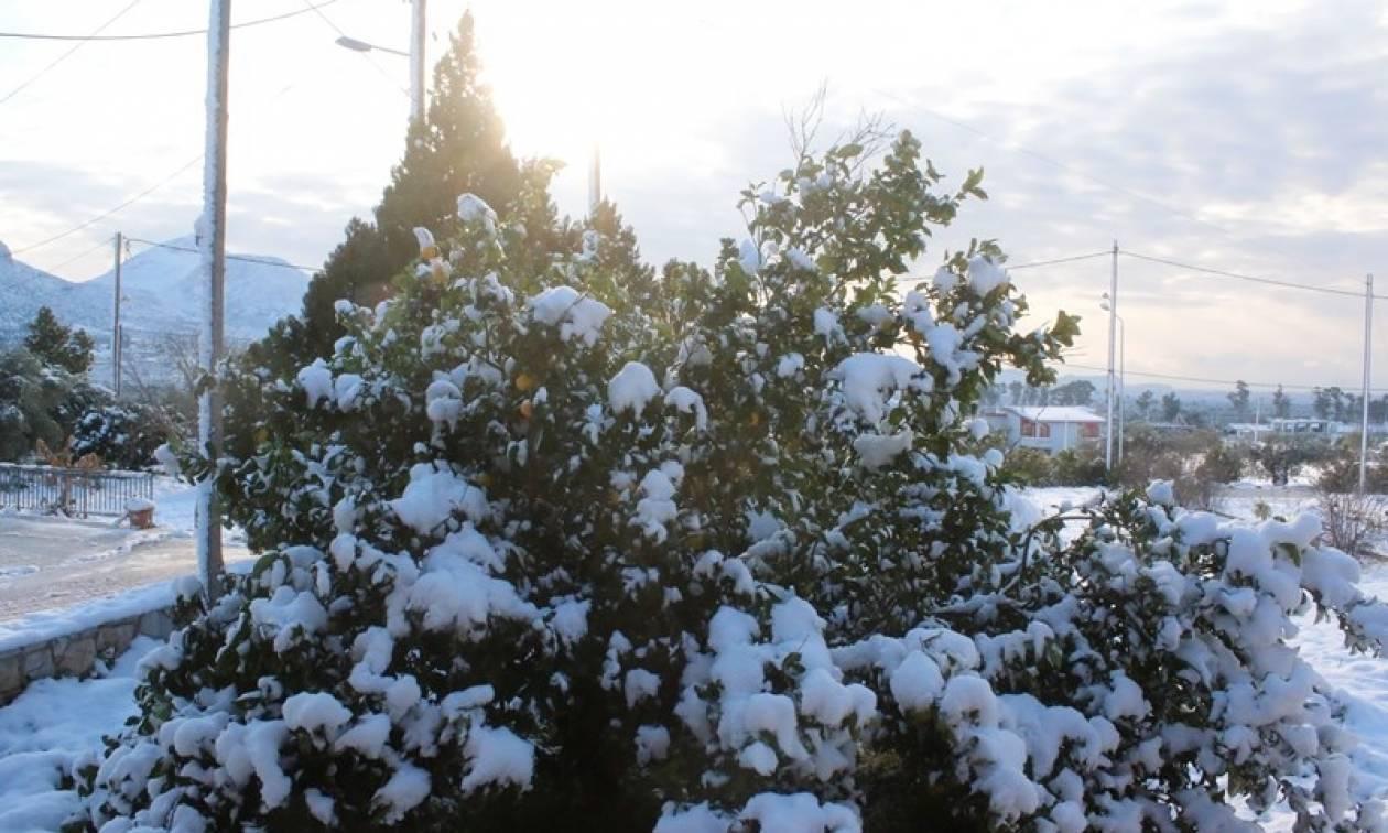 Καιρός ΤΩΡΑ: Κλειστά για δύο ημέρες τα σχολεία στη Λάρισα