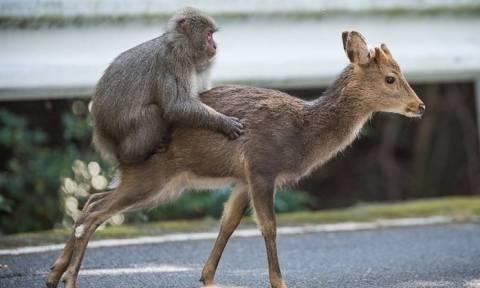 Μαϊμού έφηβος σεξ