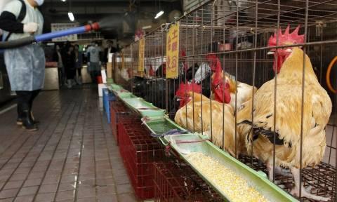 Συναγερμός στην Ευρώπη: Κρούσμα της γρίπης των πτηνών σε Ιταλία και Ισπανία