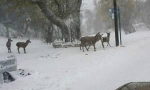 Καιρός-Δήμος Πεντέλης: Προτάσεις  για την αντιμετώπιση των χιονοπτώσεων