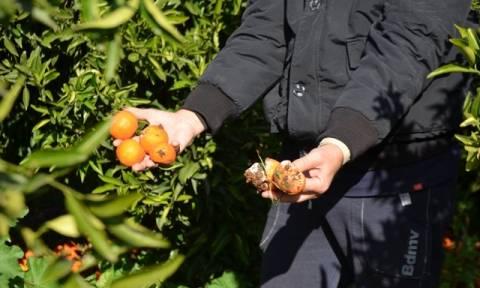 Μηνιαίες ασφαλιστικές εισφορές για τους αγρότες