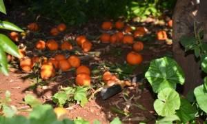 ΕΛΓΑ: Οι αγρότες να δηλώσουν άμεσα τις ζημίες από την κακοκαιρία