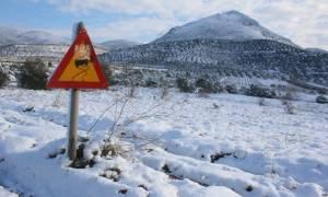 Καιρός ΤΩΡΑ: Προβλήματα στην Πελοπόννησο - Έκλεισαν τμήματα της Πατρών - Πύργου
