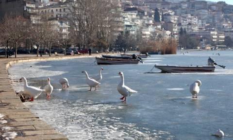 Καιρός: Πάγωσε η μικρή Πρέσπα και η λίμνη της Καστοριάς (pics)