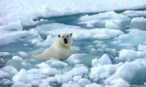 Λιώνουν οι πόλοι της Γης: Νέο αρνητικό ρεκόρ χιλιετιών στην έκταση των θαλάσσιων πάγων (Vid)