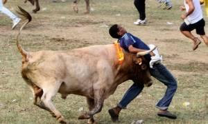Ινδία: Ταύροι σκότωσαν 2 ανθρώπους και τραυμάτισαν άλλους 28
