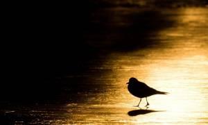Σε συναγερμό ο Παγκόσμιος Οργανισμός Υγείας για τη γρίπη των πτηνών