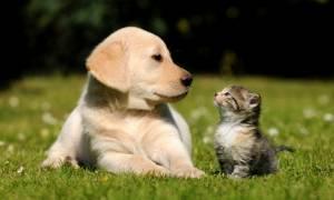 Τελικά οι σκύλοι ή οι γάτες είναι πιο έξυπνα ζώα; Μην βιαστείτε να απαντήσετε!