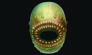 Απίστευτο: Με τεράστιο στόμα και χωρίς πρωκτό ο αρχαιότερος πρόγονος του ανθρώπου! (pic)