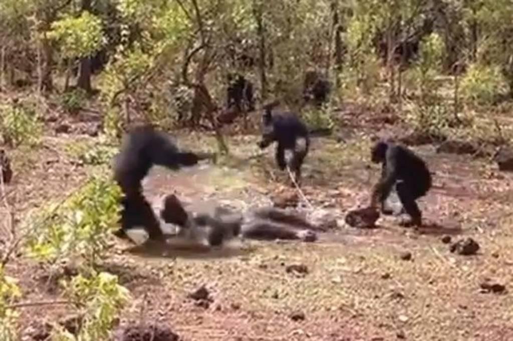 Το βίντεο της φρίκης: Του ξερίζωσαν τα γεννητικά όργανα με το στόμα και τον έφαγαν ζωντανό!
