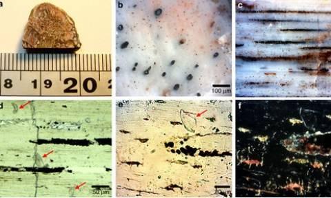 Κολλαγόνο ηλικίας… 195 εκατ. ετών! Ανακαλύφθηκε η αρχαιότερη διατηρημένη πρωτεΐνη (pic)