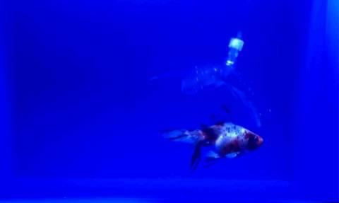 Αυτό είναι το πιο παράξενο θαλάσσιο ρομπότ και οι απίστευτες δυνατότητες του! (Vid)