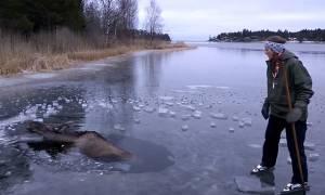 Σουηδία: Η αγωνιώδης διάσωση άλκης μέσα από παγωμένη λίμνη (vid)