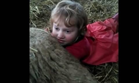 Σάλος: Μητέρα έβαλε την 3χρονη κόρη της να ξεγεννήσει προβατίνα (video)