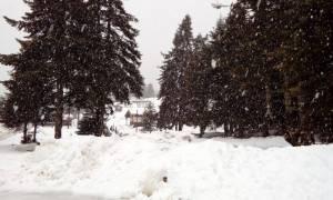 Τρίκαλα: Στα… λευκά «ντύθηκε» το Περτούλι (pics)
