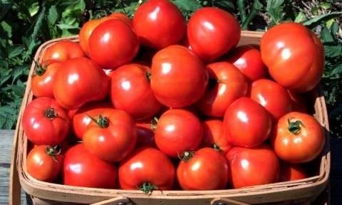 Πειραιάς: Κατασχέθηκαν 6 τόνοι ντομάτας με υπολείμματα φυτοφαρμάκου