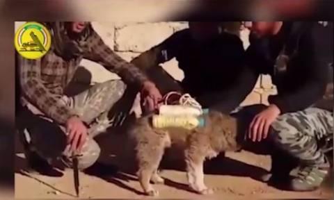 Νέα φρικαλεότητα των τζιχαντιστών: Χρησιμοποιούν κουταβάκια για βομβιστές αυτοκτονίας (vid)