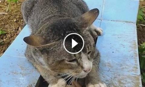 Αυτή η γάτα ζει επί ένα χρόνο πάνω στον τάφο του ιδιοκτήτη της (Video)