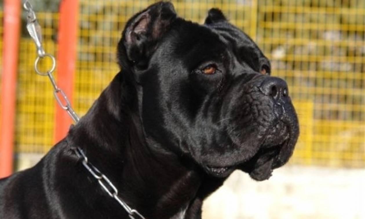 Καλαμάτα: Στο νοσοκομείο 49χρονη ύστερα από επίθεση σκυλιών
